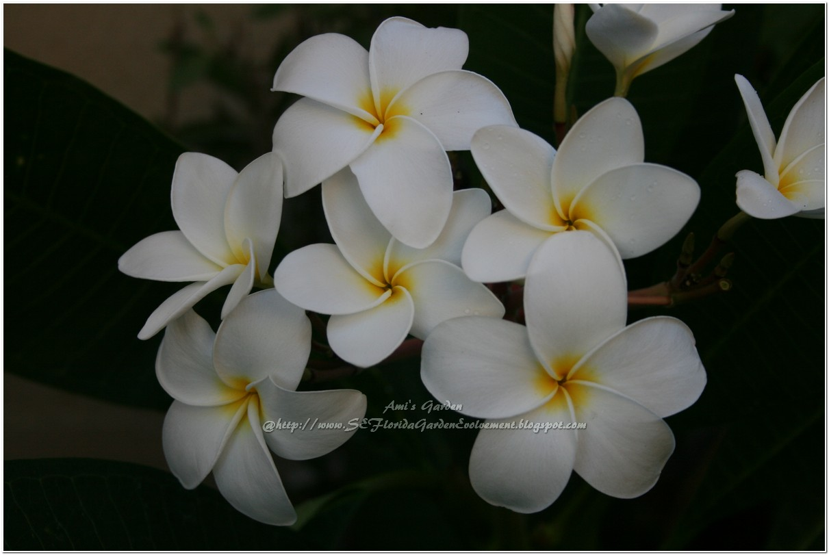 White flowers names and images 11 hd wallpaper hdflowerwallpaper white flowers names and images 11 hd wallpaper mightylinksfo