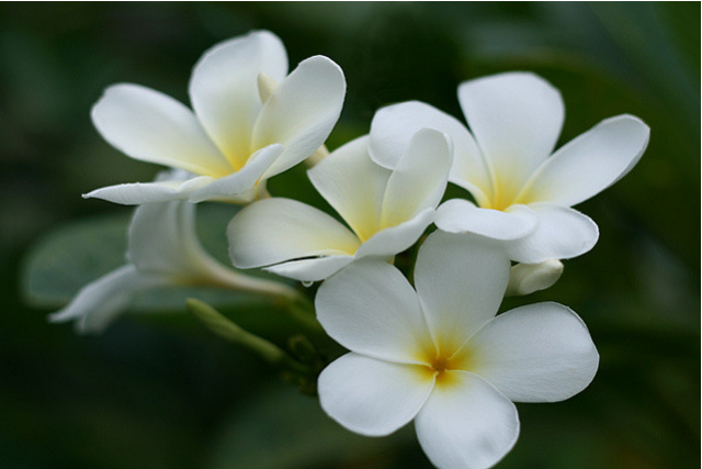 White flowers names and images 12 free hd wallpaper white flowers names and images background mightylinksfo