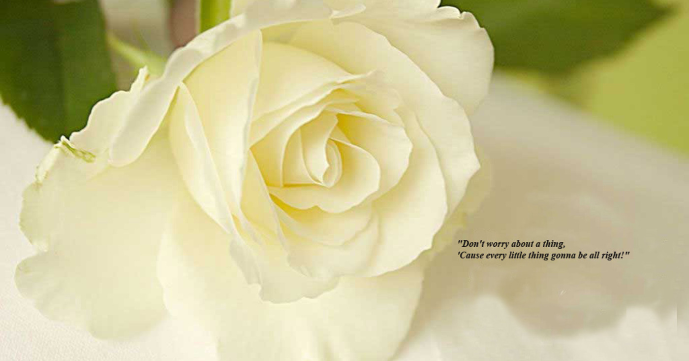 White Flowers Quotes 15 Background Wallpaper Hdflowerwallpaper