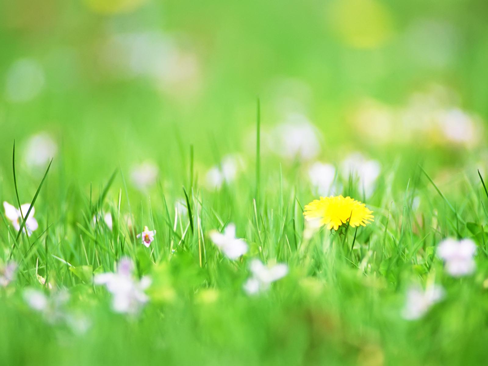 White Flowers Quotes 3 Free Hd Wallpaper Hdflowerwallpaper