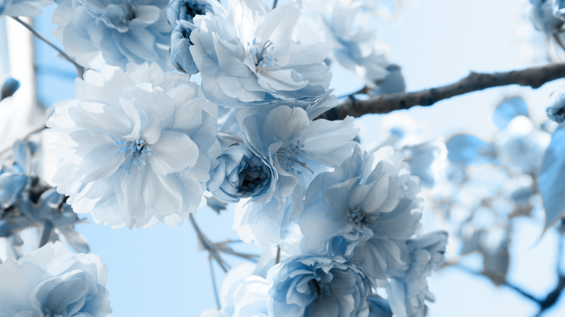 White wallpaper with blue flowers 9 cool hd wallpaper white wallpaper with blue flowers desktop background mightylinksfo Choice Image