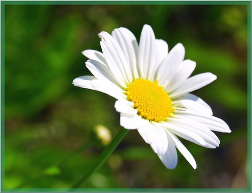 White yellow flowers 28 background hdflowerwallpaper white yellow flowers background mightylinksfo