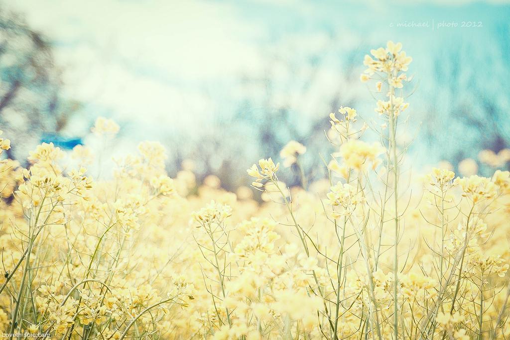 Yellow Flowers Tumblr Free Wallpaper
