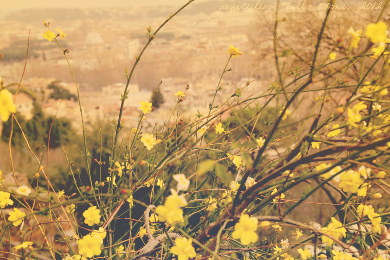 Yellow flowers tumblr 34 high resolution wallpaper yellow flowers tumblr hd wallpaper mightylinksfo
