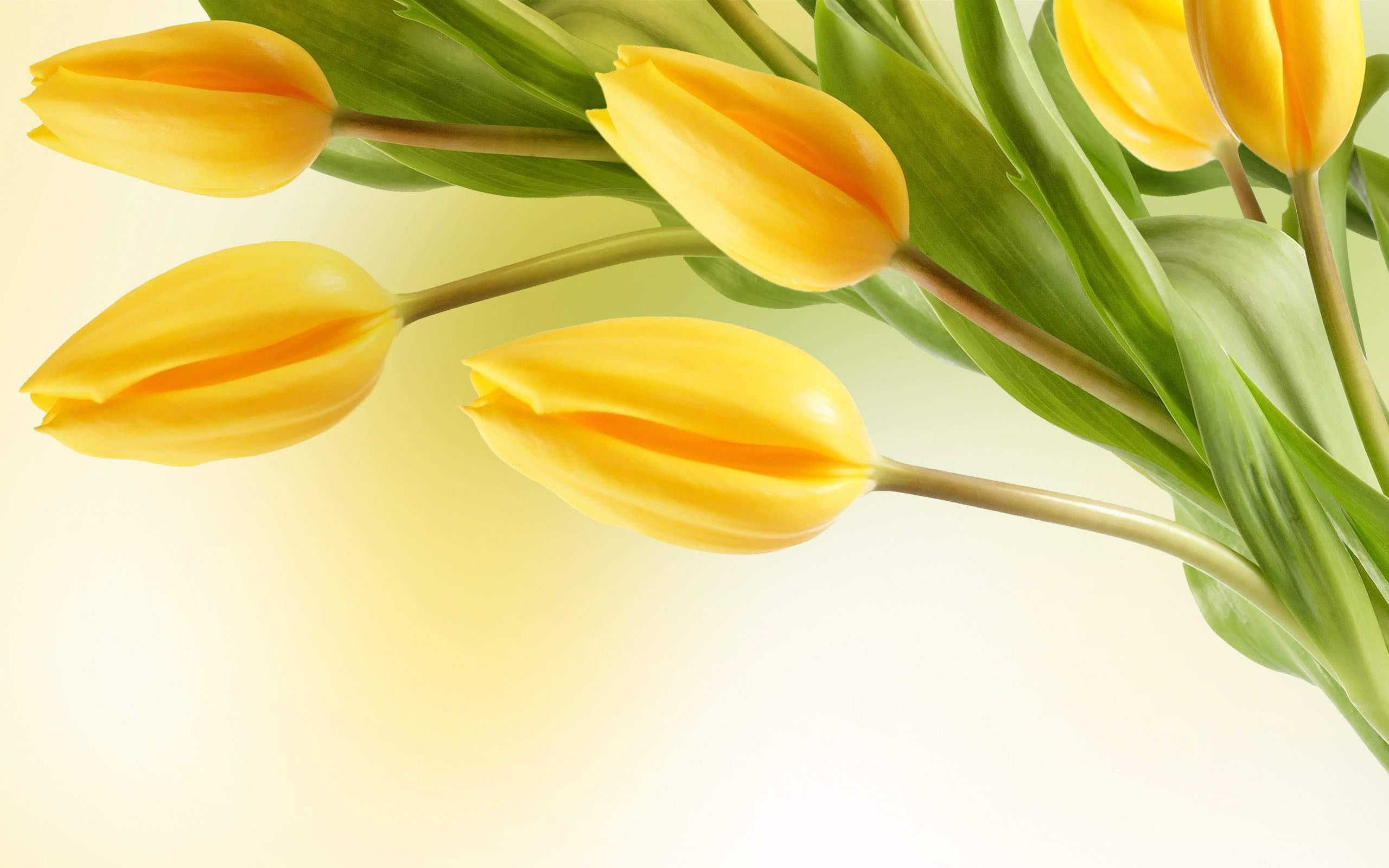 Yellow flowers wallpaper 11 background hdflowerwallpaper yellow flowers wallpaper hd wallpaper mightylinksfo