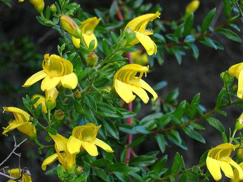 Yellow Spring Flowers Uk Hd Wallpaper