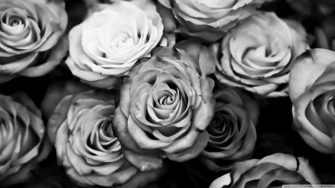 Black And White Rose Wallpaper Background