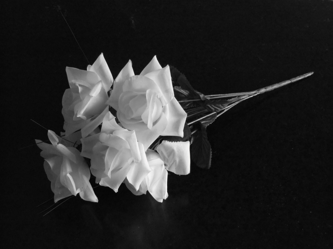 Black And White Rose Wallpaper 26 Cool Wallpaper