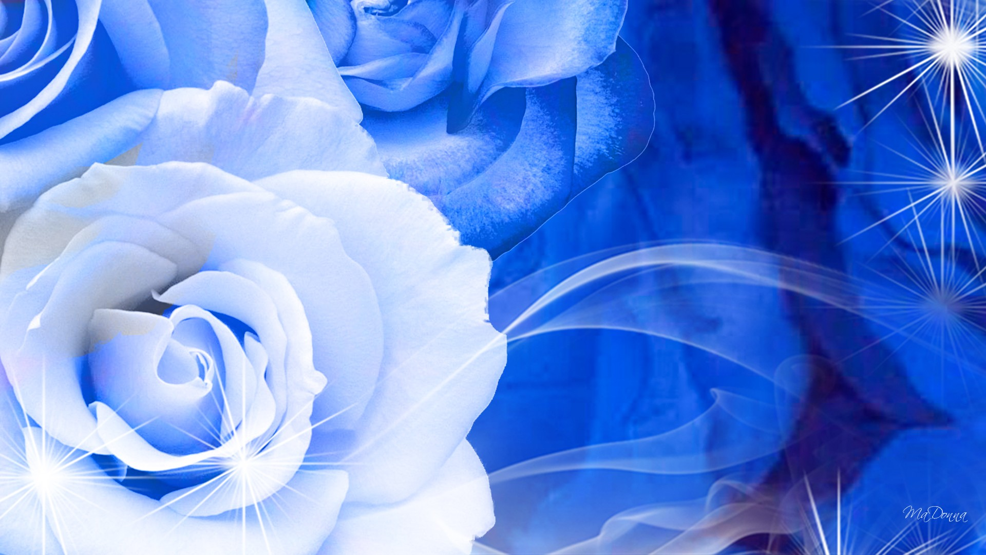 Blue And White Rose Wallpaper 6 Hd