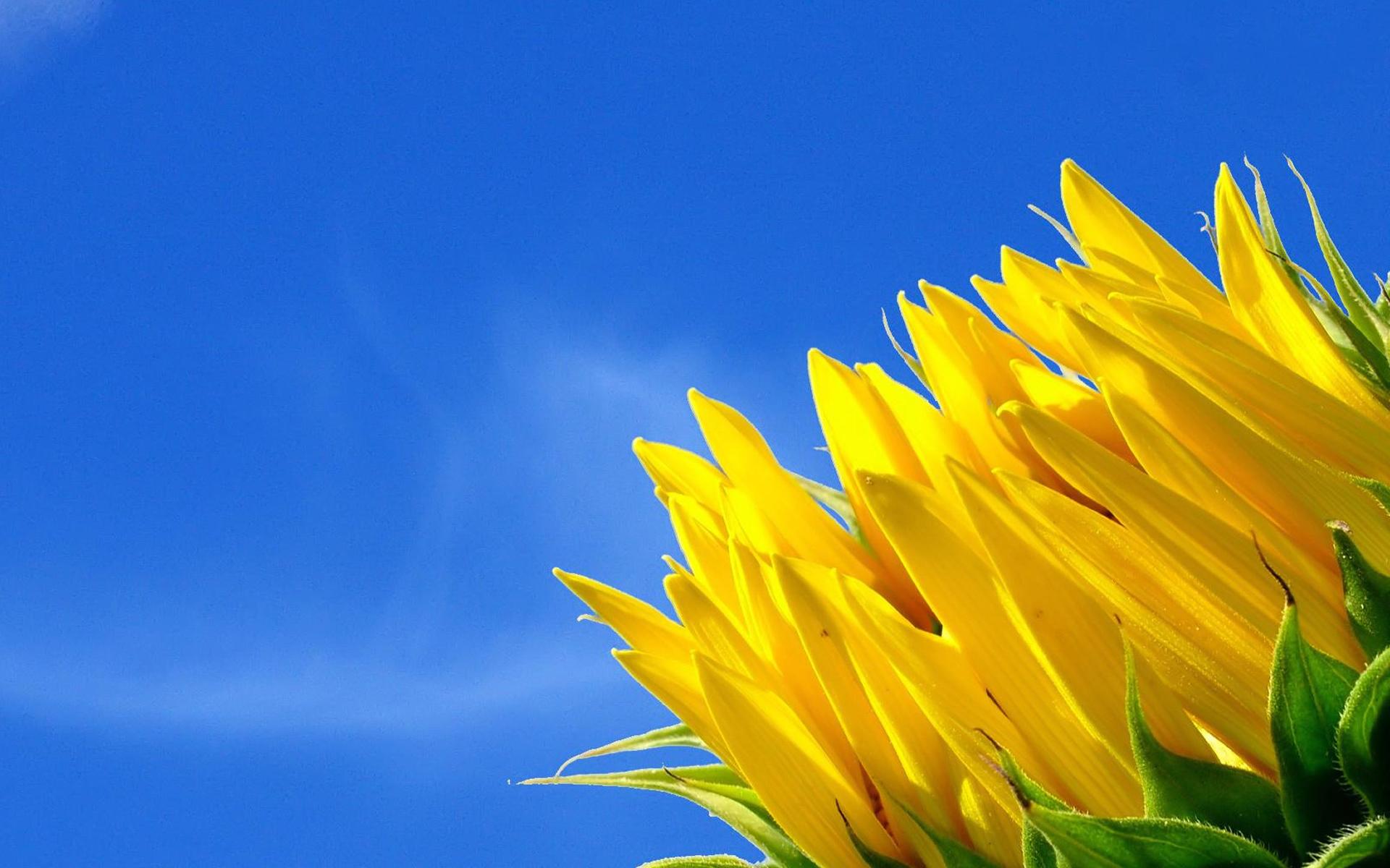 Blue And Yellow Flower Wallpaper 13 Desktop Background
