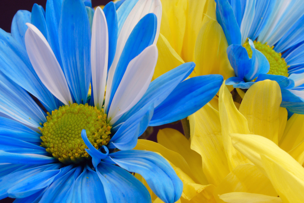 Blue And Yellow Flower Wallpaper 17 High Resolution
