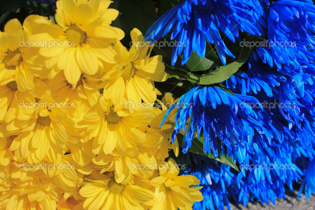 Blue and yellow flower wallpaper 19 high resolution wallpaper blue and yellow flower wallpaper free wallpaper mightylinksfo