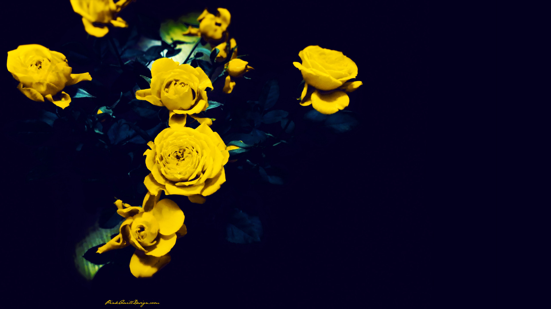 Blue And Yellow Rose Wallpaper 19 High Resolution
