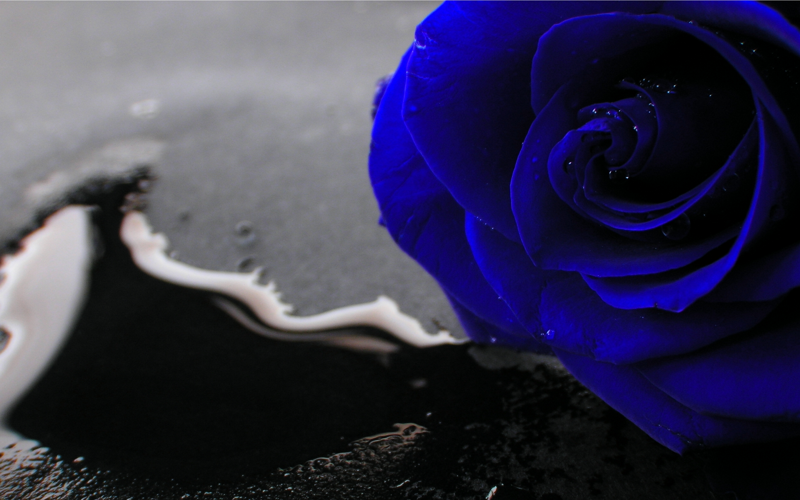 blue rose wallpaper 69 free hd wallpaper - hdflowerwallpaper