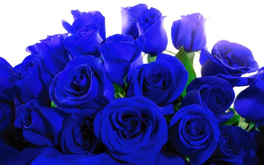 Открытка с синими розами 6