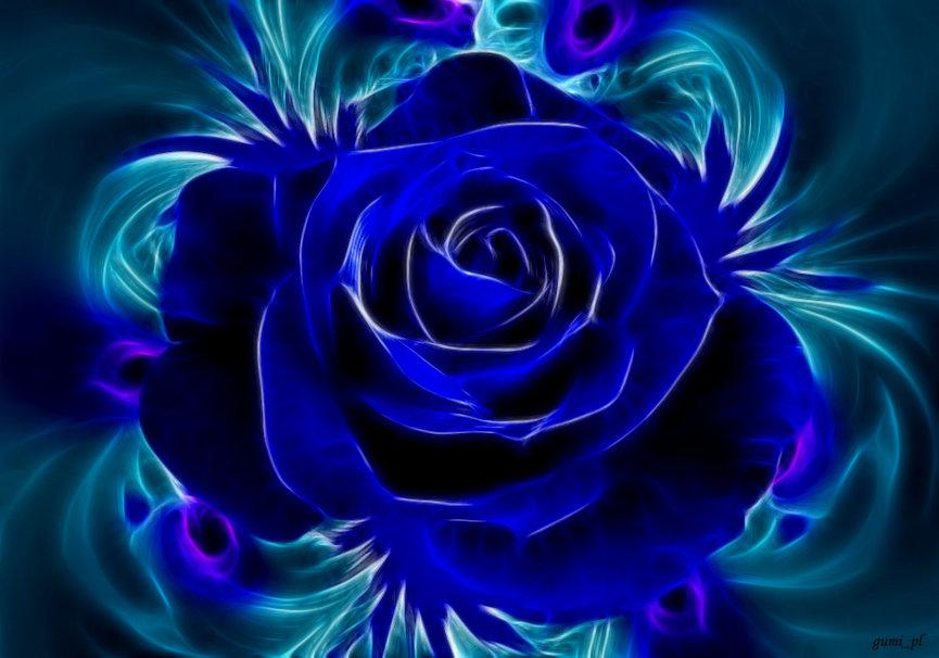 Blue Roses Wallpaper 6 Desktop