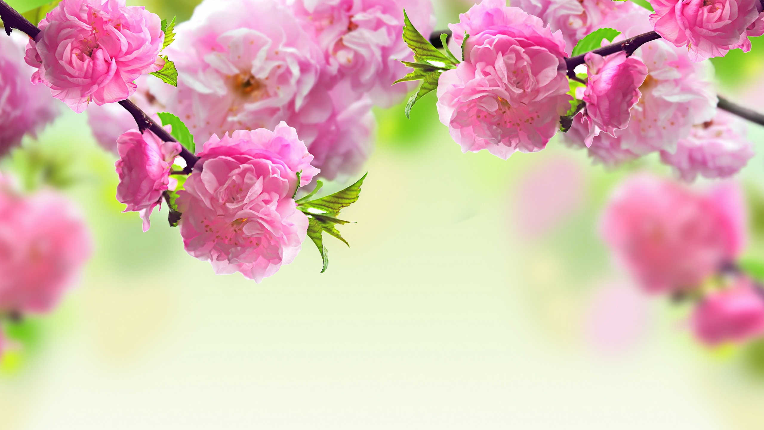Flower wallpaper border 24 free hd wallpaper hdflowerwallpaper flower wallpaper border 24 free hd wallpaper mightylinksfo Image collections