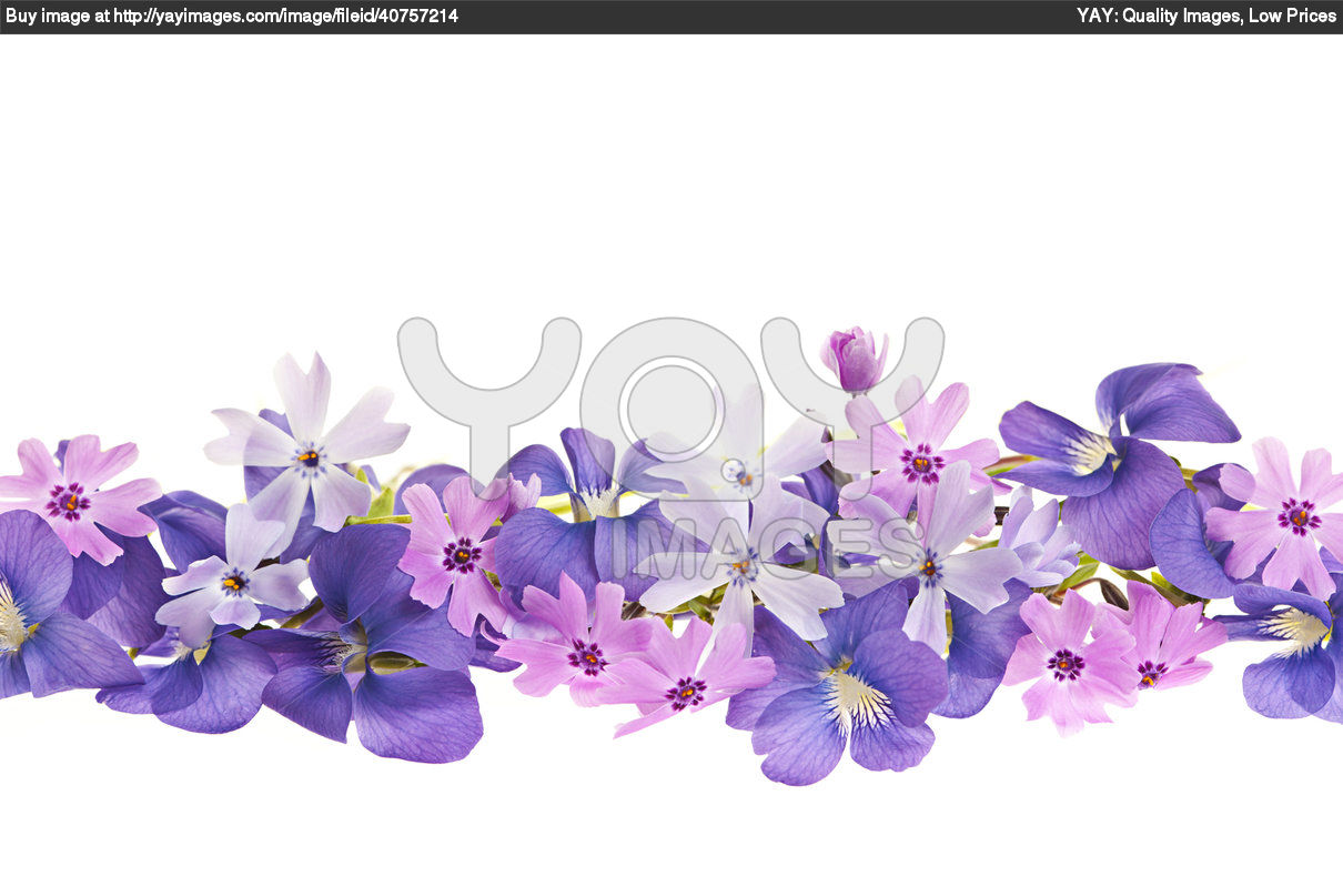 flower wallpaper border bing images
