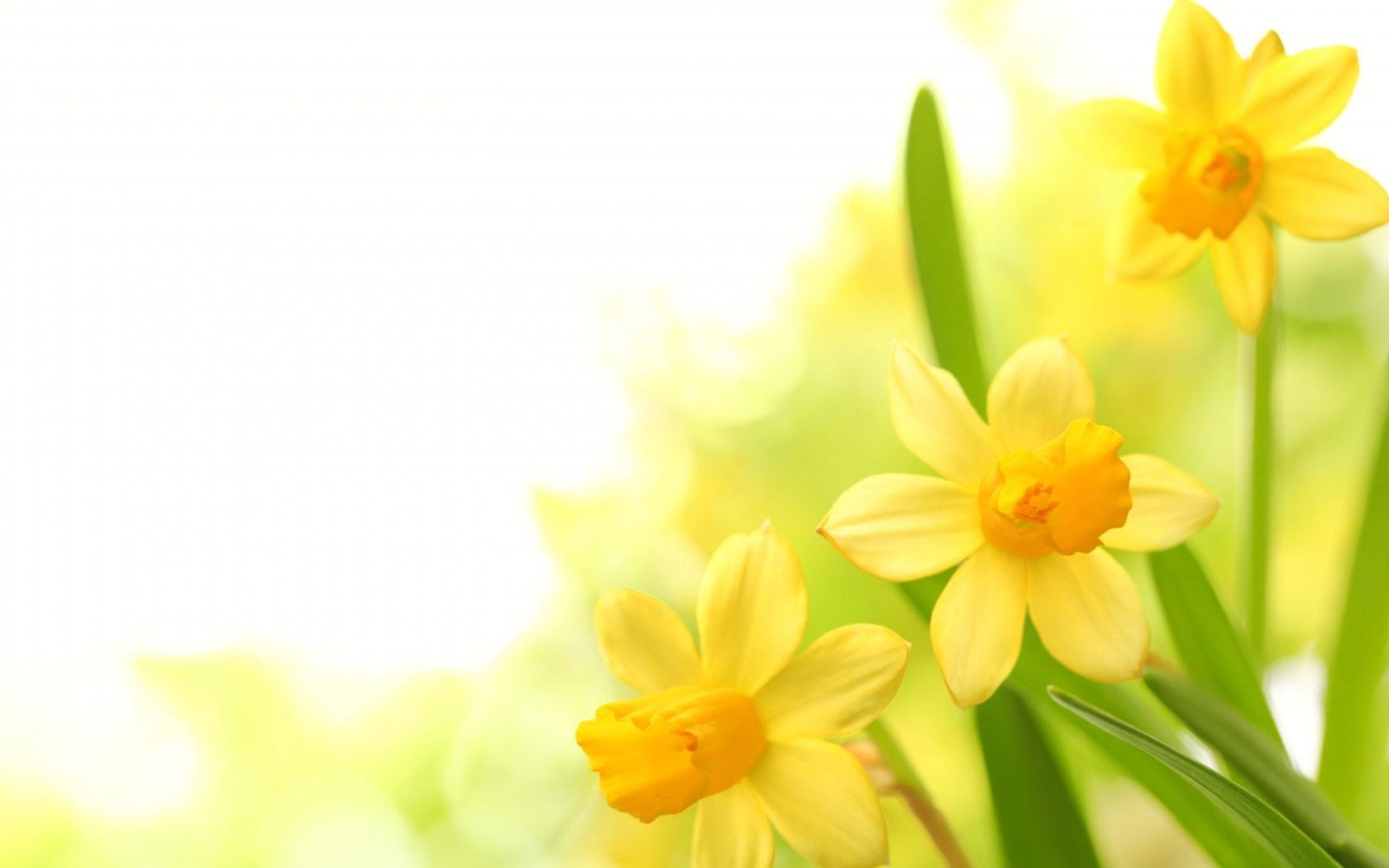 Flower Wallpaper For Iphone 1 High Resolution