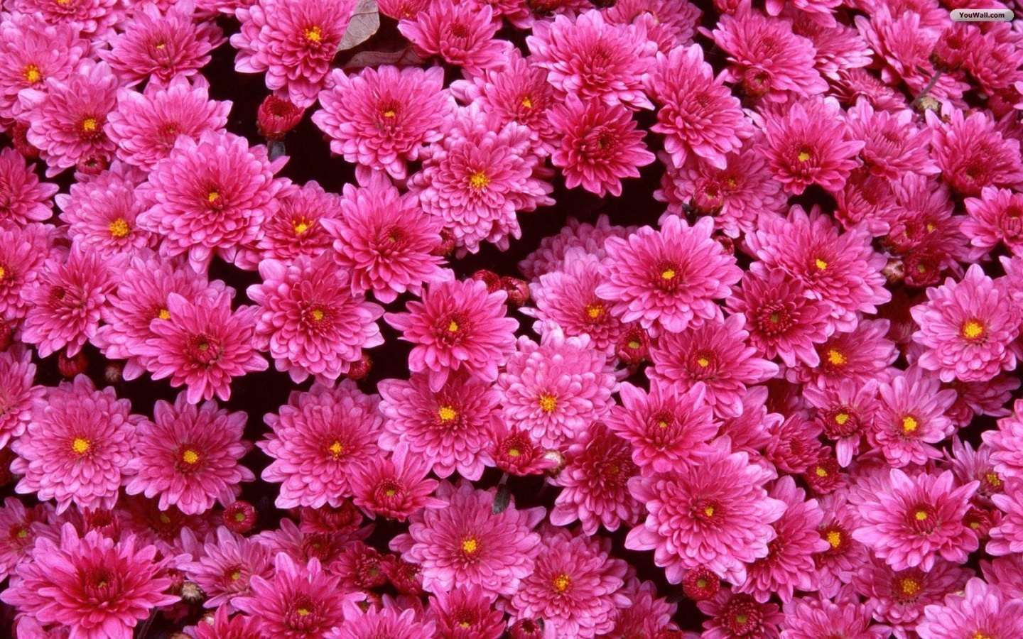 Flower Wallpaper For Iphone 25 Background