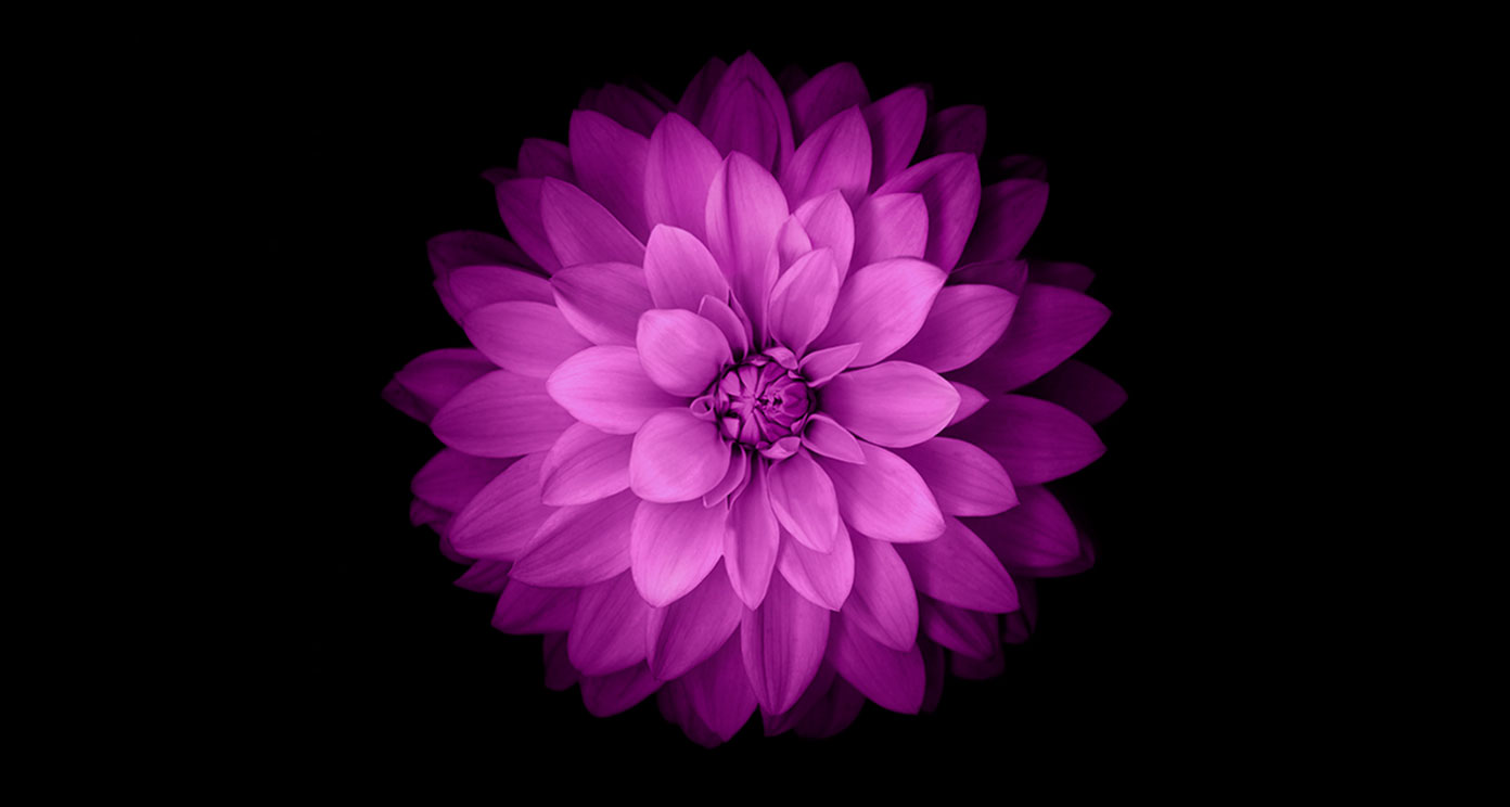 Flower wallpaper for iphone 5 free hd wallpaper hdflowerwallpaper download convert view source tagged on flower wallpaper for iphone free voltagebd Gallery