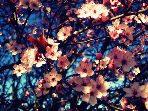 Download Convert View Source Tagged On Flower Wallpaper Tumblr