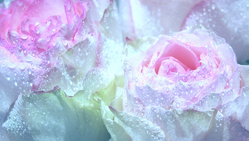 Free pink rose with raindrops wallpaper 15 background free pink rose with raindrops wallpaper hd wallpaper altavistaventures