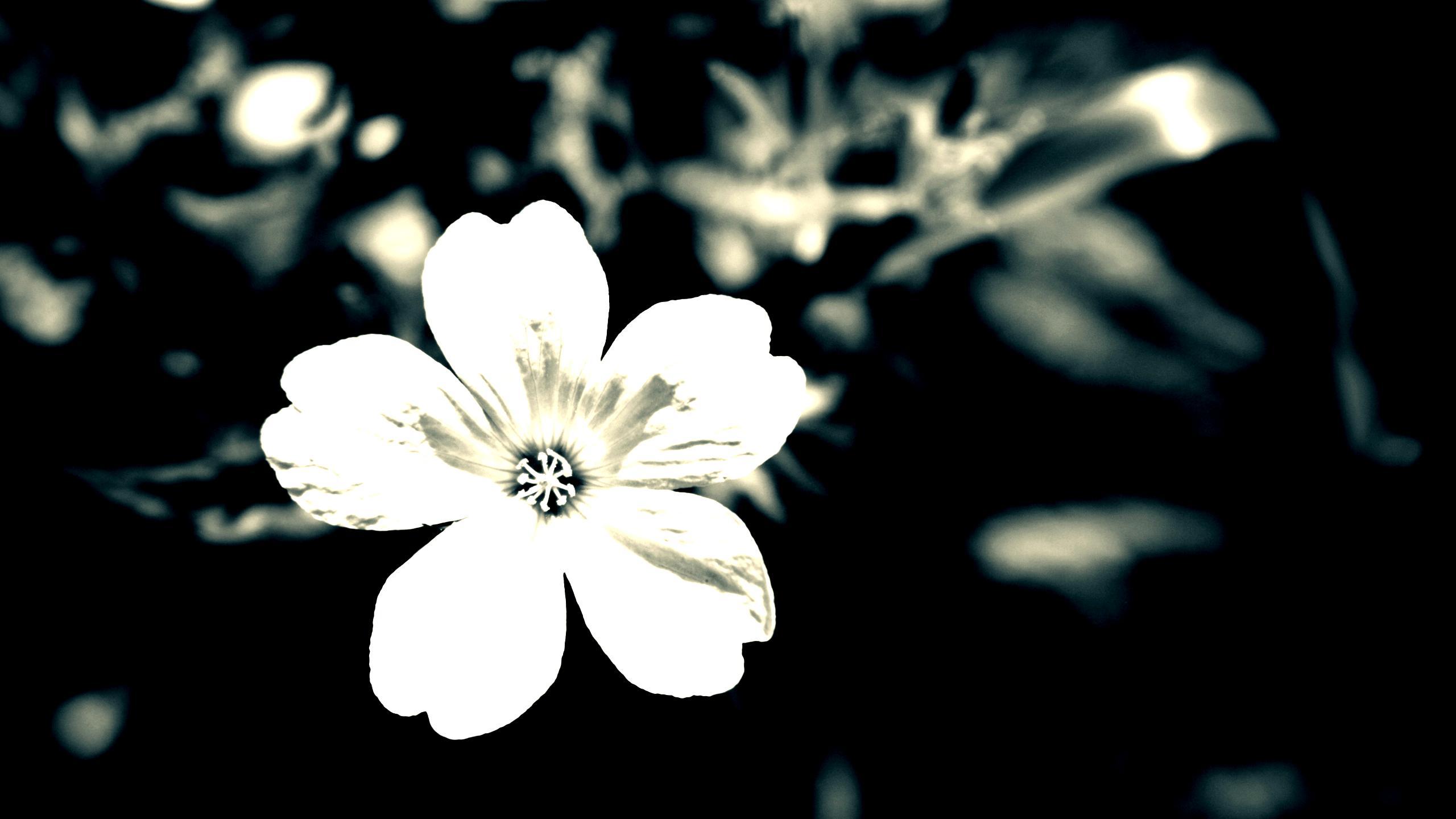 Gray and white flower wallpaper 5 background hdflowerwallpaper gray and white flower wallpaper free wallpaper mightylinksfo