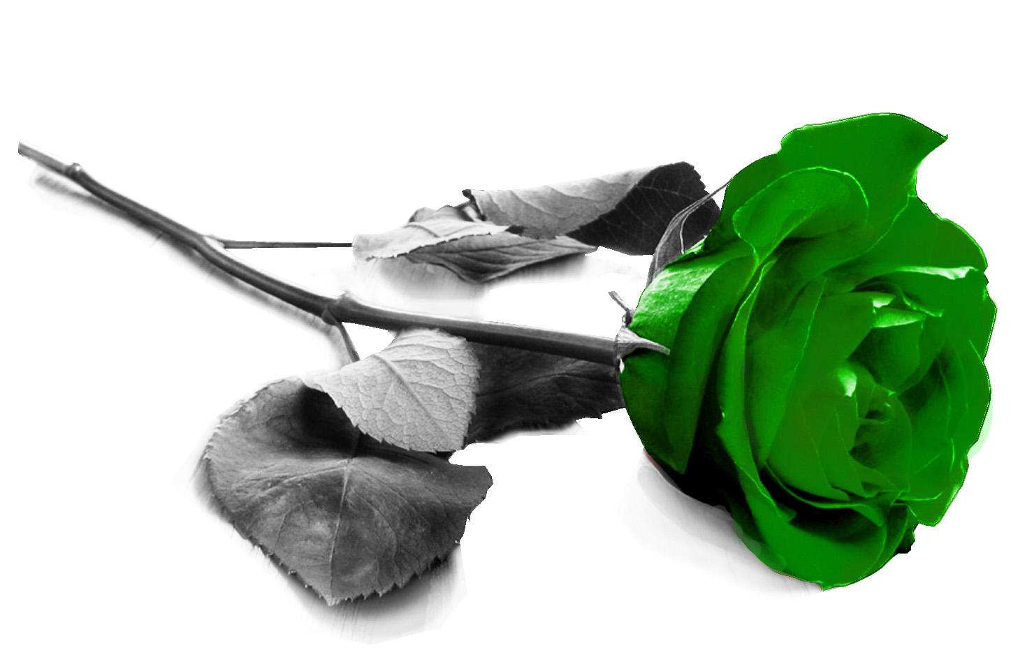 Green Rose 236 Hd Wallpaper