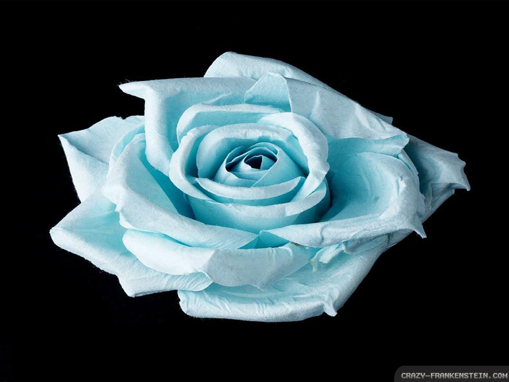 Light Blue Roses Wallpaper 13 High Resolution Wallpaper ...
