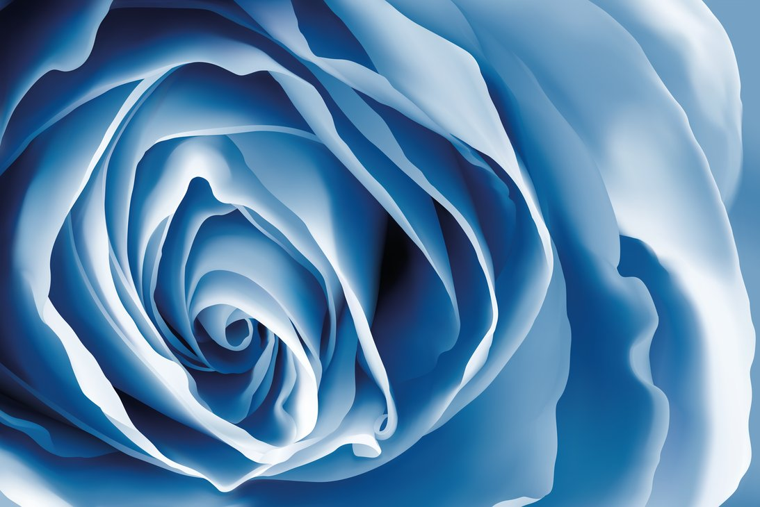 Light Blue Roses Wallpaper 15 Desktop Background ...