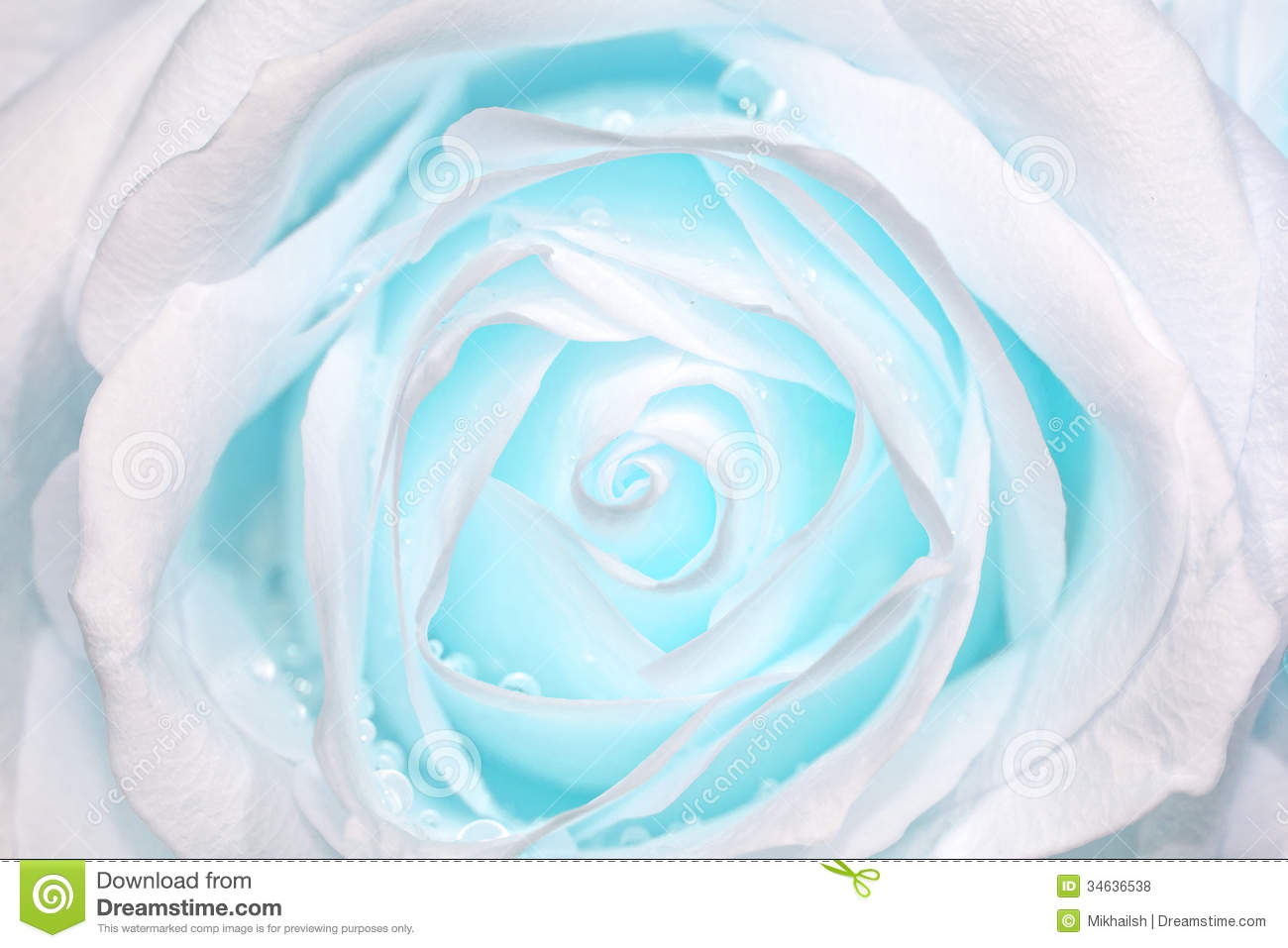 Light Blue Roses Wallpaper 16 Free Hd Wallpaper ...