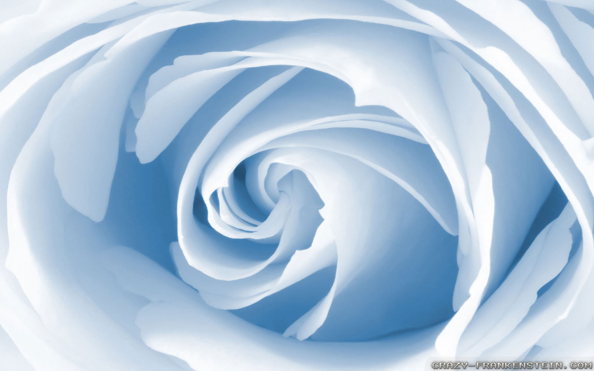 Light Blue Roses Wallpaper 18 Free Hd Wallpaper ...