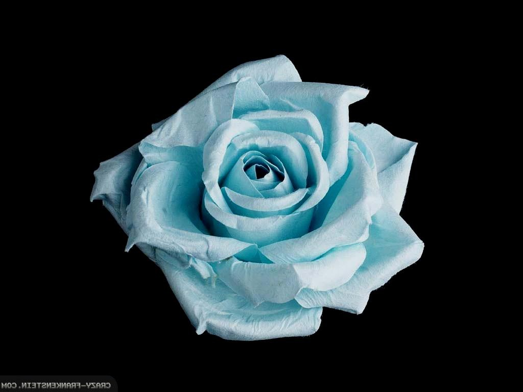 Light Blue Roses Wallpaper 8 Free Hd Wallpaper ...