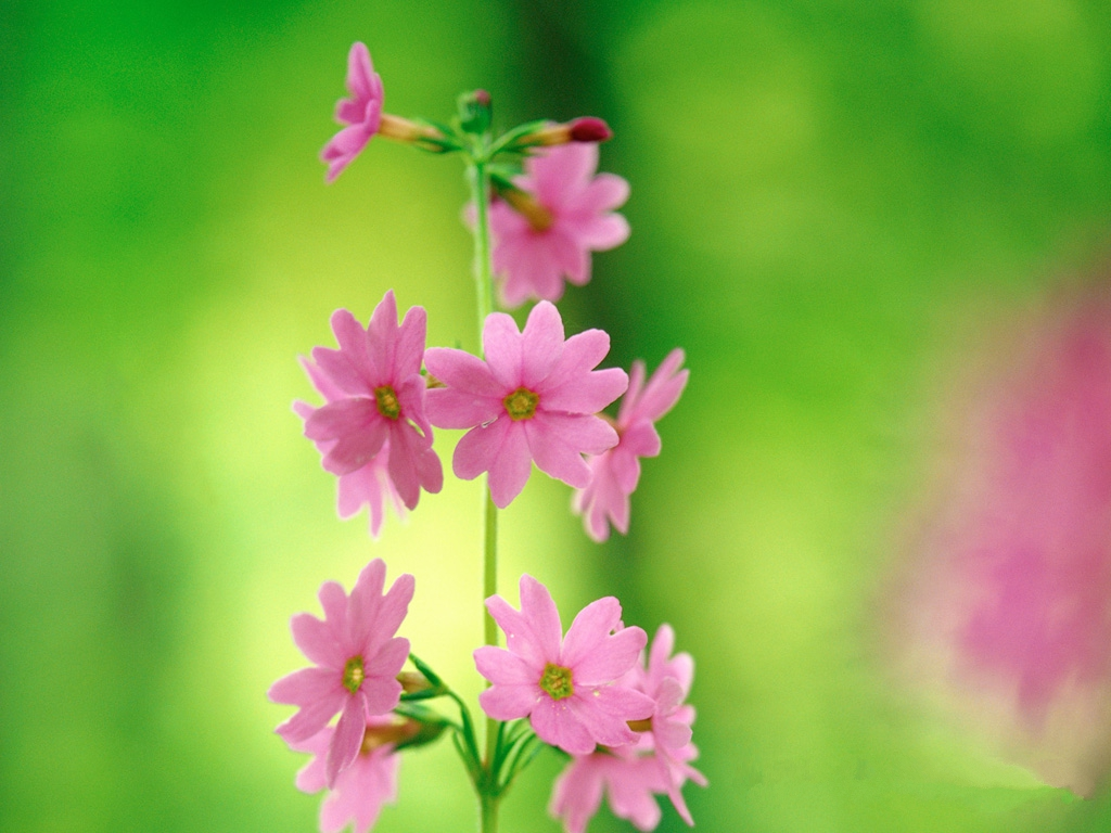 Pink And Green Flower Wallpaper 12 Widescreen Wallpaper