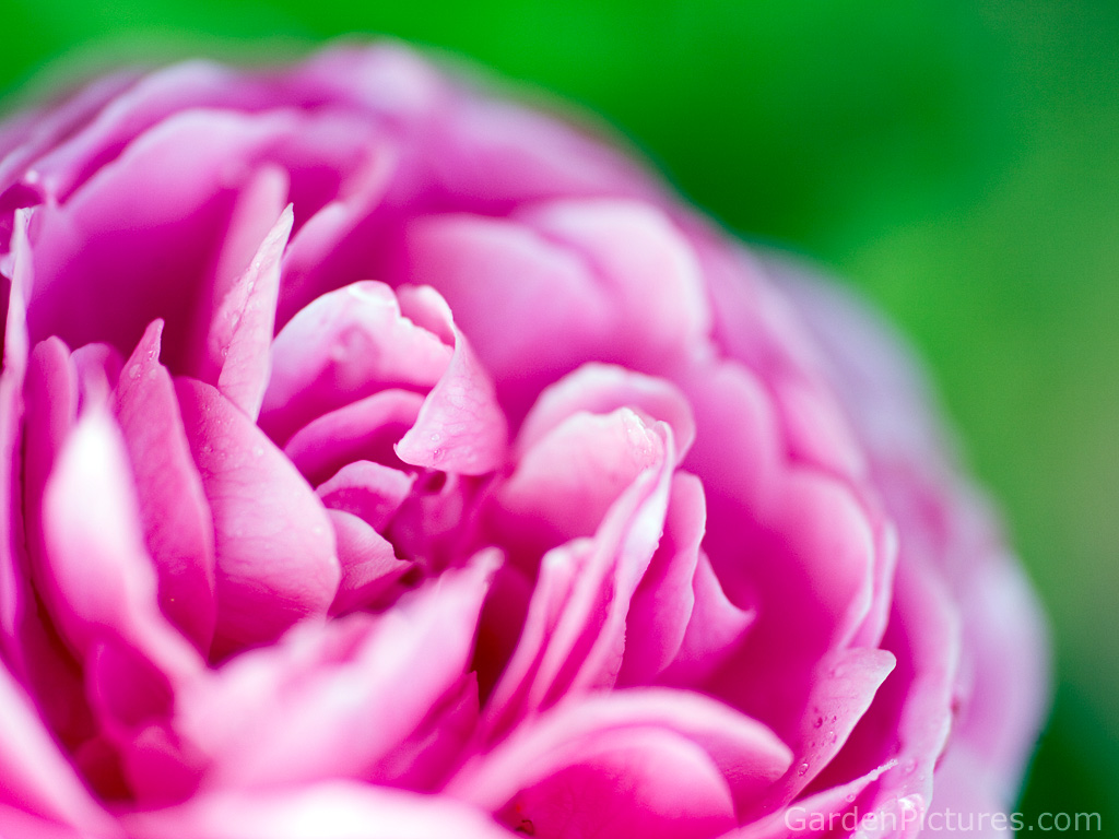 Pink and green flower wallpaper 3 background wallpaper pink and green flower wallpaper hd wallpaper mightylinksfo