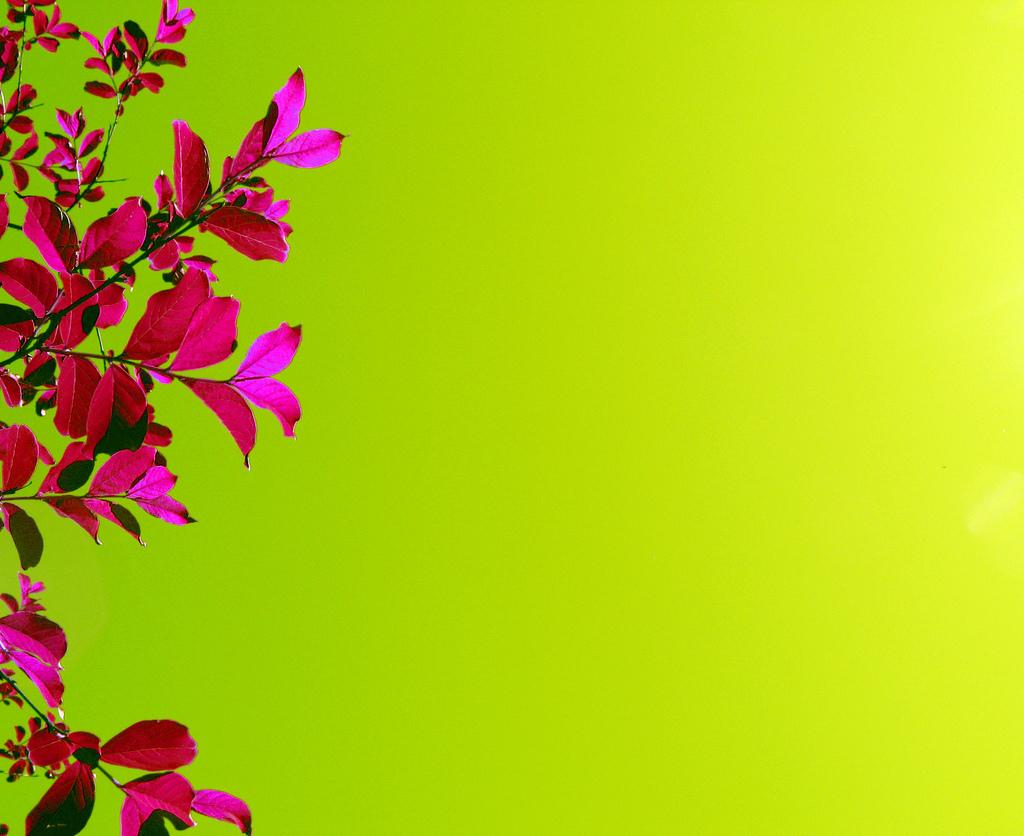 Pink And Green Flower Wallpaper 4 Cool Wallpaper ... for Green And Pink Flower Wallpaper  70ref