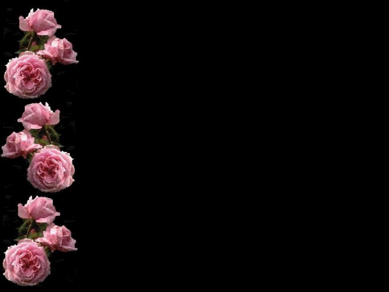 Pink Rose Wallpaper Border HD
