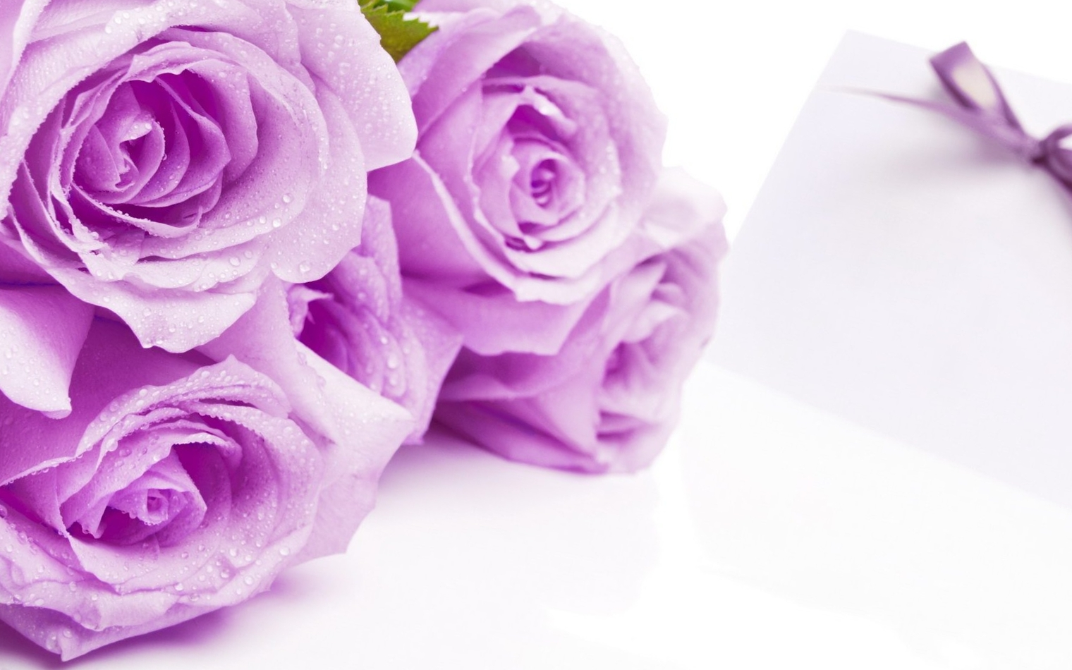 Purple rose wallpaper border 23 cool hd wallpaper for Can you get purple roses
