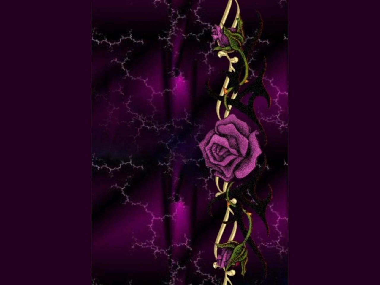Purple Rose Wallpaper Home Widescreen