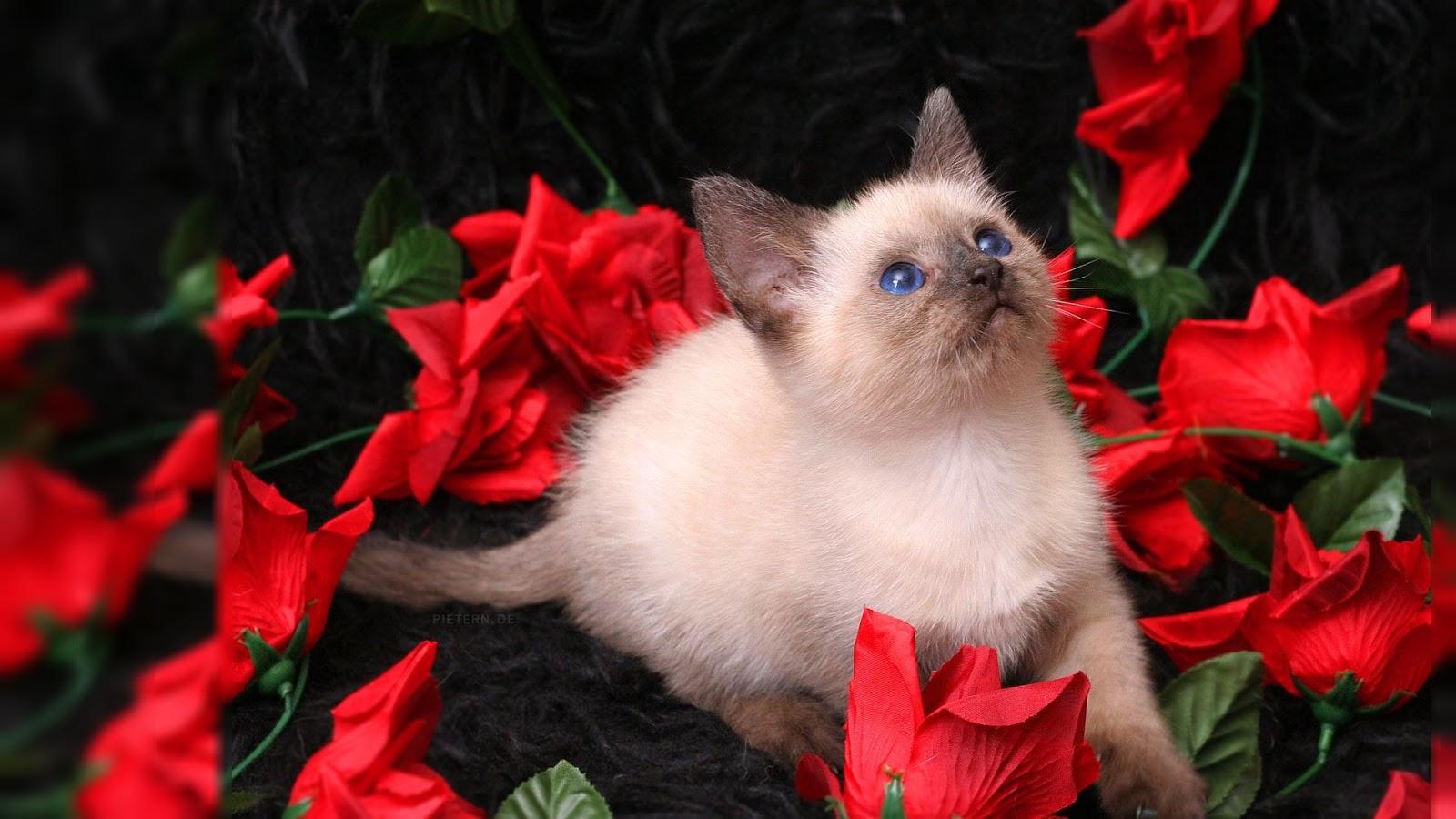 red rose desktop background - photo #34