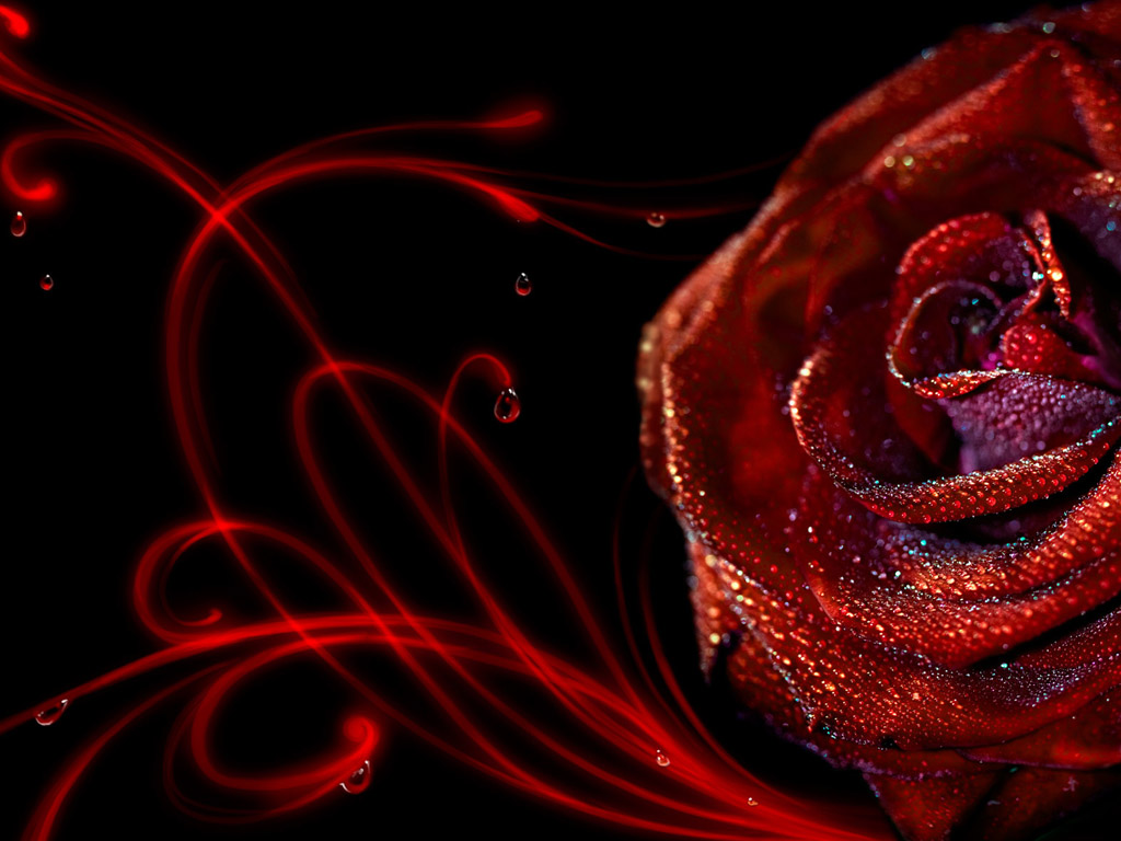 Must see Wallpaper High Resolution Red - red-roses-wallpaper-for-desktop-5-high-resolution-wallpaper  You Should Have_336562.jpg