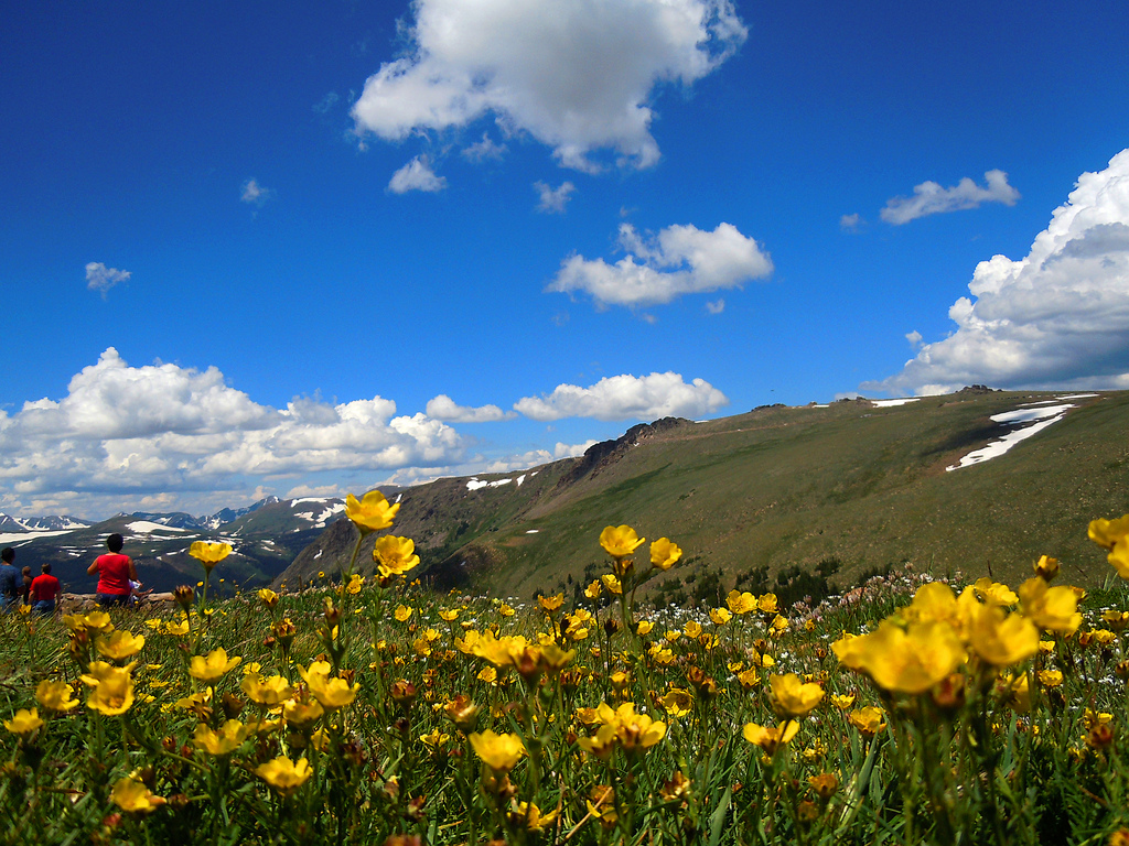 Rocky Mountain Wildflowers Photos Free Wallpaper