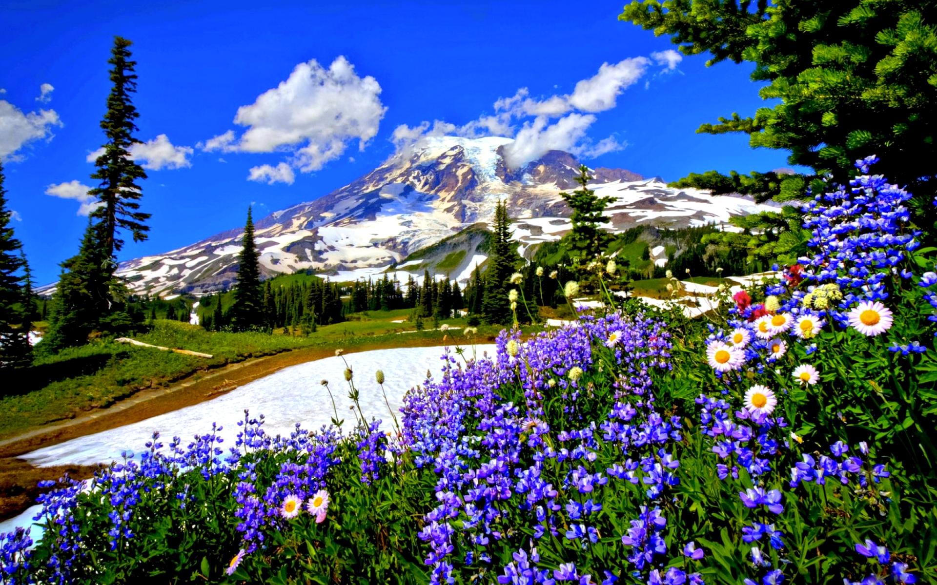 Good Wallpaper Mountain Flower - types-of-mountain-flowers-17-widescreen-wallpaper  Graphic_93861.jpg