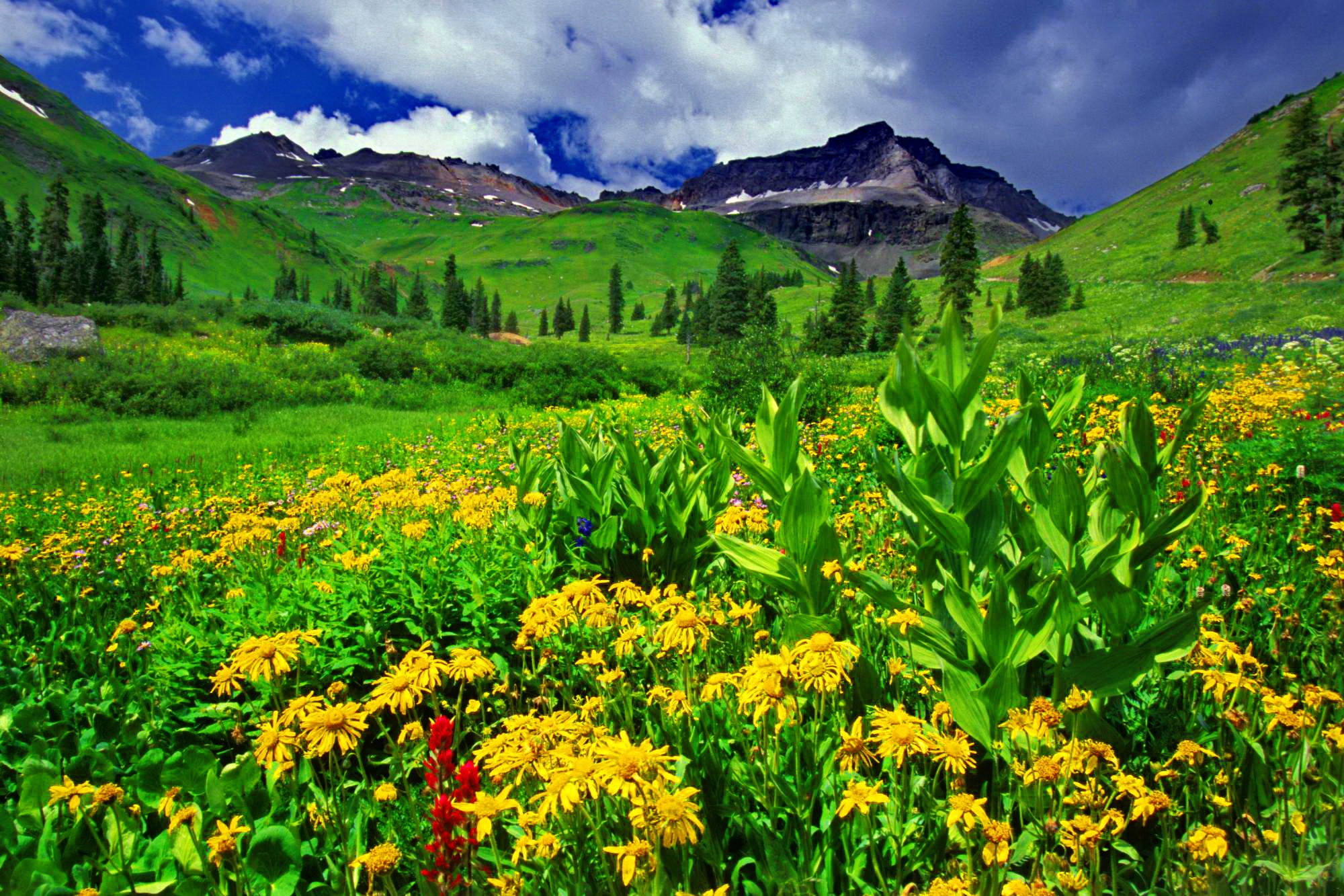 Types Of Mountain Flowers 25 Background