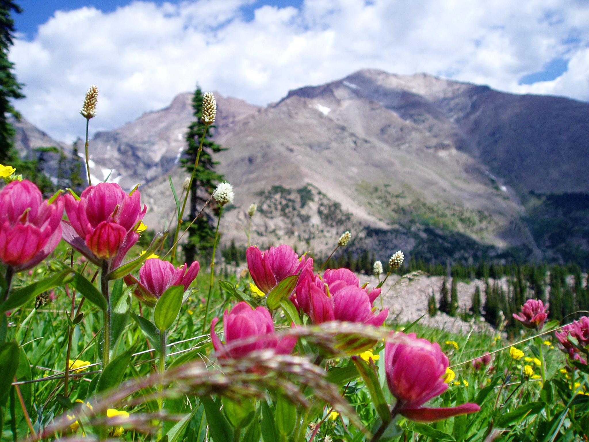 Mountains Flowers HD desktop wallpaper : High Definition .