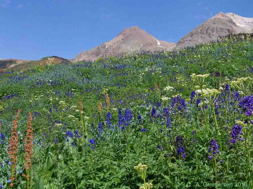 Types Of Mountain Flowers 9 Desktop Background