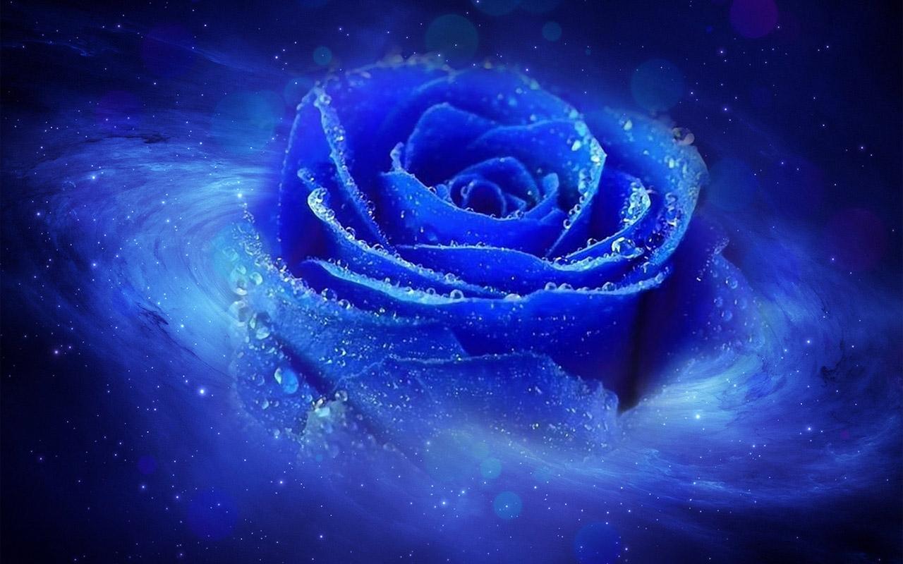 wallpaper of blue roses 19 cool wallpaper. Black Bedroom Furniture Sets. Home Design Ideas