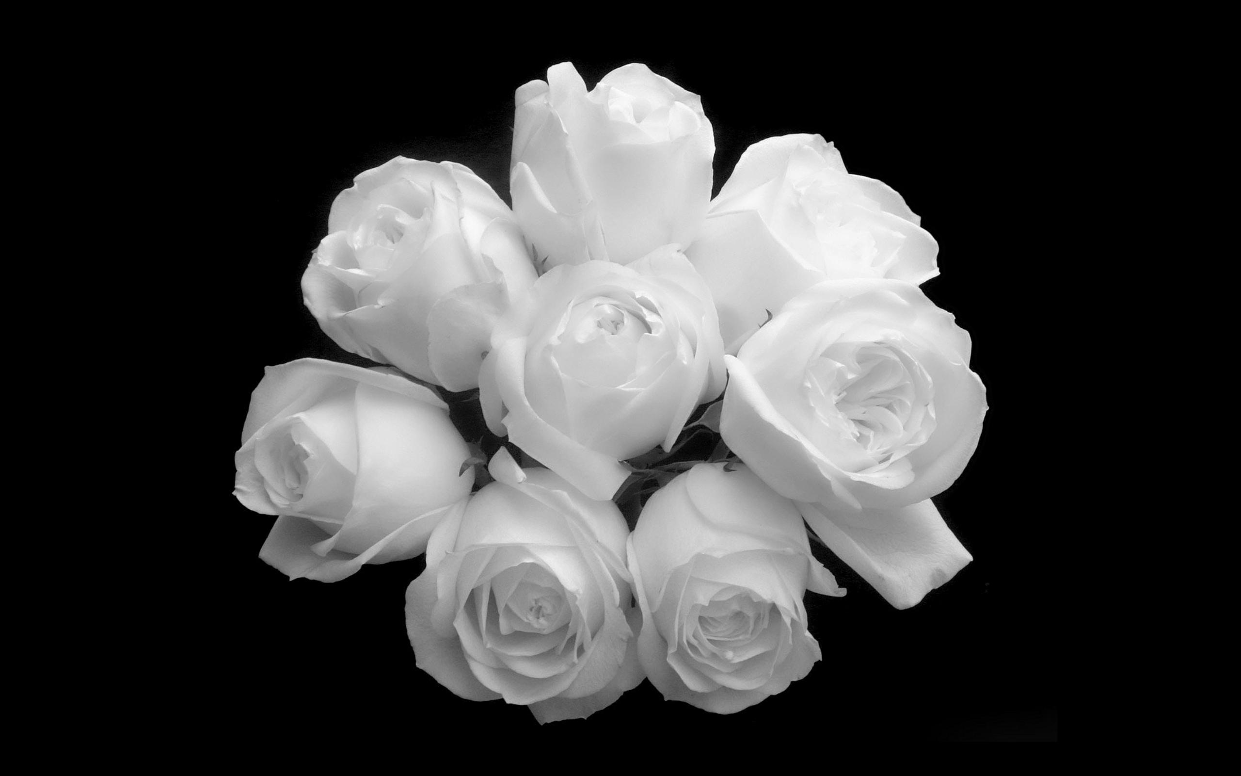 White Roses Wallpaper Free