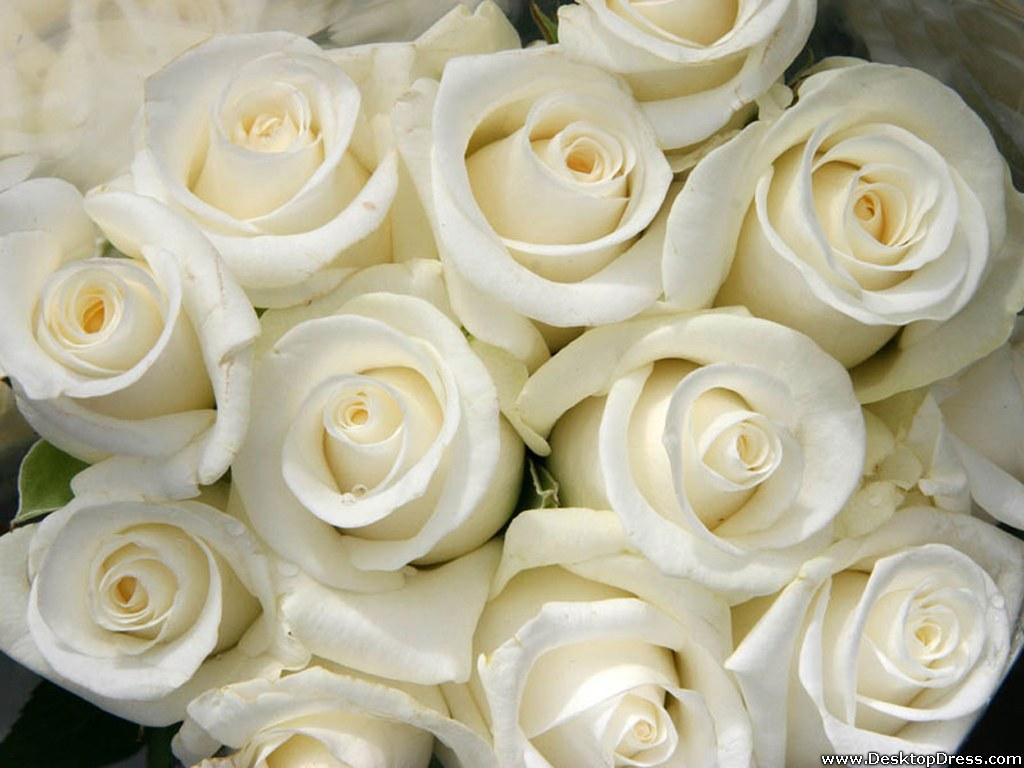 White Roses Wallpapers For Desktop Free Wallpaper